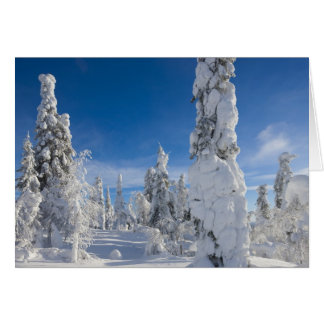 Winter landscape in Lappland Card