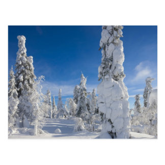 Winter landscape in Lappland Postcard