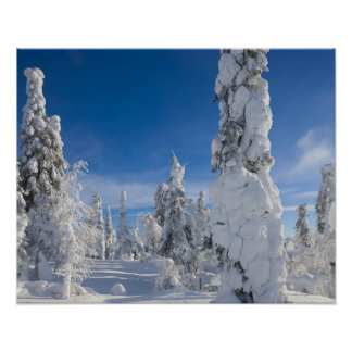 Winter landscape in Lappland Posters