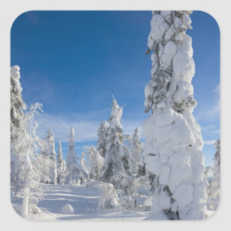 Winter landscape in Lappland Square Sticker