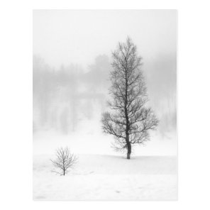 Winter landscape with tree in fog postcard