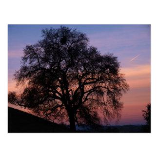 Winter Oak at Sunset Postcard