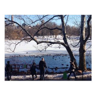 Winter on Central Park Lake Postcards