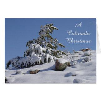 Winter Pine Colorado Christmas Card