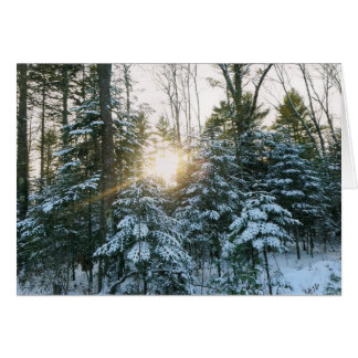 Winter Pines Card