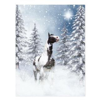 Winter pinto horse postcard