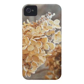 Winter Plant Frost IPhone 4 Case
