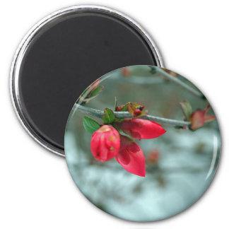 Winter Redbud 6 Cm Round Magnet
