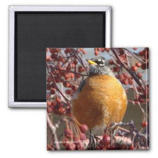 Winter Robin Magnet