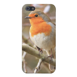 Winter Robin Redbreast iPhone 5/5S Covers