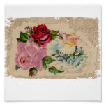 Winter Roses Painted Poster