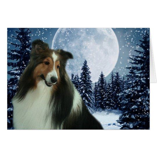 Winter Sheltie Card