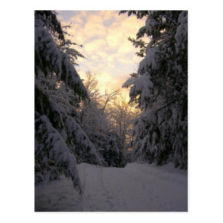 Winter Sky Postcard