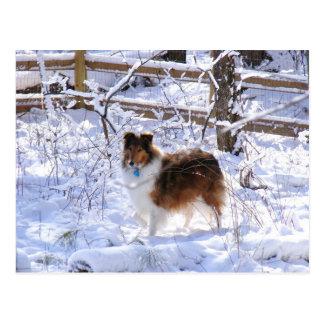Winter Snow Collie Postcard