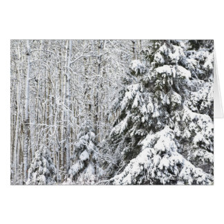 Winter Snow Load! Card