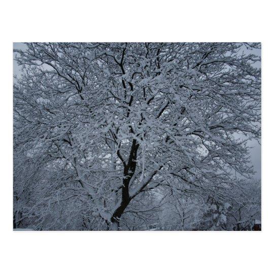 Winter Snow on a Tree Postcard