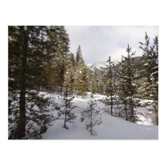 Winter Snowy Mountain Scene in Montana Postcard
