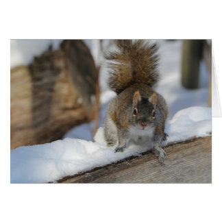 Winter Squirrel Card