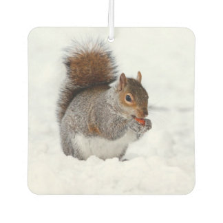 Winter Squirrel in the snow