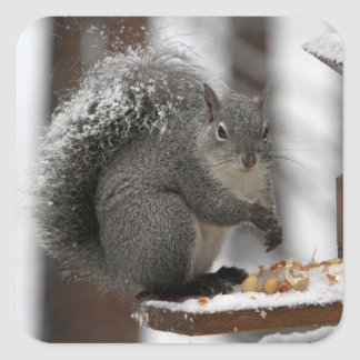 Winter Squirrel on a Sticker