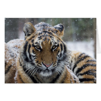 Winter Tiger Face Card