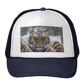 Winter Tiger Face Trucker Hat