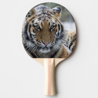 Winter Tiger Face Ping Pong Paddle