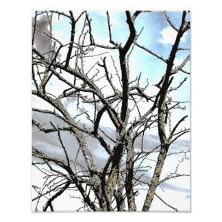 WINTER TREE ART PHOTO