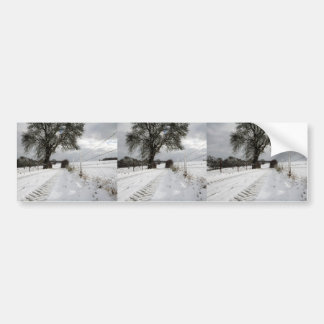 Winter Tree Country Road + Snow Bumper Stickers