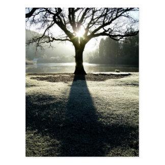 Winter Tree of Light at Derwentwater Postcard