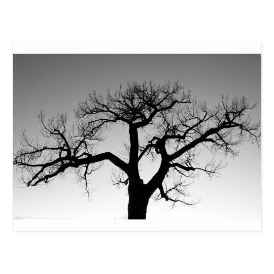 Winter Tree Silhouette Postcard