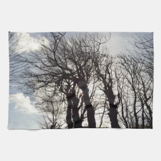 Winter Trees along a Country Lane Cornwall England Tea Towel