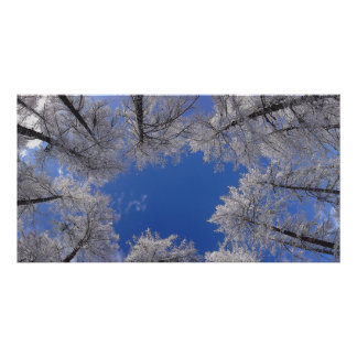 Winter Trees And Sky Poster