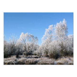 WINTER TREES ART PHOTO