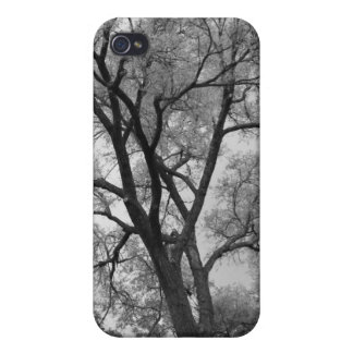 Winter Trees Black White landscape Photography Cases For iPhone 4