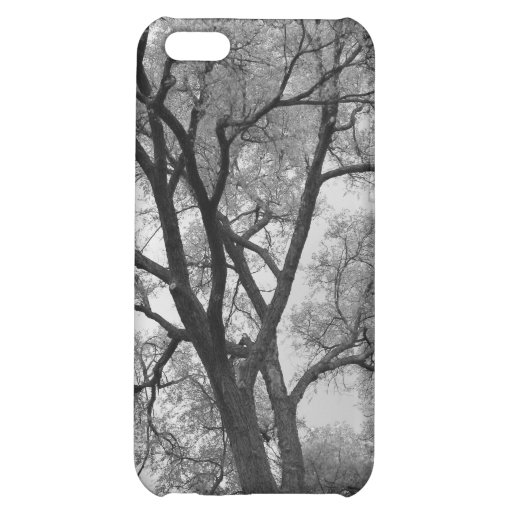 Winter Trees Black & White landscape Photography Case For iPhone 5C