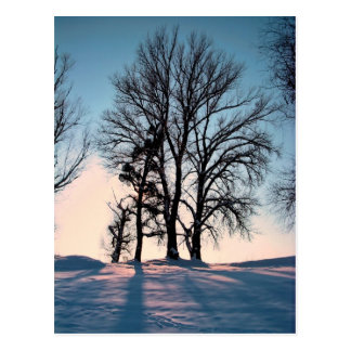 Winter trees on  blue sky background postcard