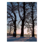 Winter trees on  blue sky background postcards
