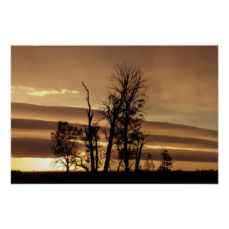 Winter trees silhouettes with sunrise poster