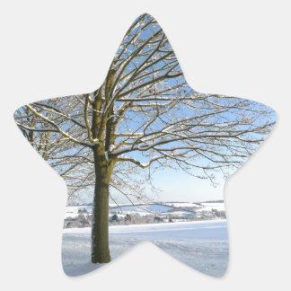 Winter Trees Star Sticker