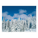 Winter trees, Steamboat, Colorado, USA Postcard