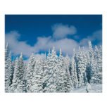 Winter trees, Steamboat, Colorado, USA Poster