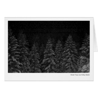 Winter Trees, Sun Valley Idaho Card