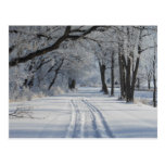 Winter Walking Trail Post Card