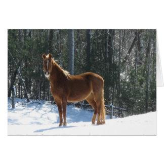 Winter Watch Greeting Card