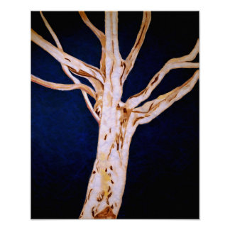 Winter White (Sycamore in the Evening Chill) Poster