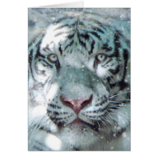 Winter White Tiger Card