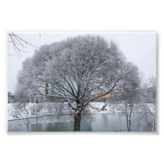 Winter willow photo print