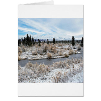 Winter Willow Shrub Spruce Trees Savage River Card
