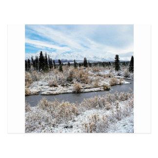 Winter Willow Shrub Spruce Trees Savage River Postcard